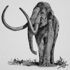Mastodonte :: Série Tattoo - Atelier Sandra